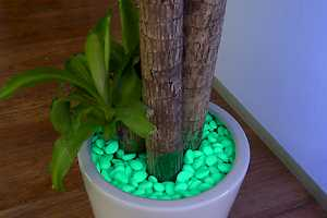 Enhance your house plants with CORE Glow stones.
